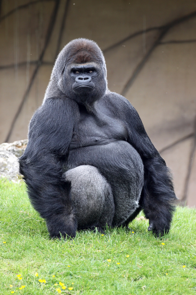 marketing to doctors 800lb gorilla